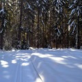 Old-growth trees on the Crystal Springs Trails.- Crystal Springs Sno-Park Trails