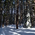 Crystal Springs Trails.- Crystal Springs Sno-Park Trails