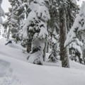 Liberally spaced trees make for great tree skiing.- Yodelin