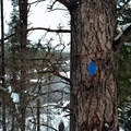 Well-marked trails in Lake Wentachee State Park.- Lake Wenatchee State Park South Loop