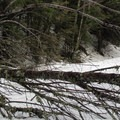 A downed tree on the road to Talupus Lake.- Talapus Lake Snowshoe