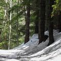 Begining up the Talapus Lake Trail.- Talapus Lake Snowshoe