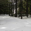 Looking through the forest to the lake basin.- Talapus Lake Snowshoe