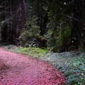 Well-groomed trails throughout.- Purisima Creek Trail