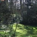 Picnic area in Stern Grove.- Stern Grove + Pine Lake Park