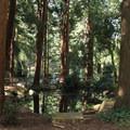 A small pond beside the Trocadero at Stern Grove.- Stern Grove + Pine Lake Park
