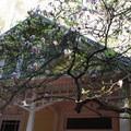 Trocadero and magnolias.- Stern Grove + Pine Lake Park