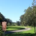 Off-leash dog area in Stern Grove.- Stern Grove + Pine Lake Park