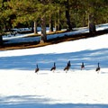 Geese may be present depending on the time of year.- Leavenworth Golf Course Trails