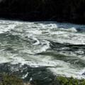 Wild Sheep in September, 2008.- Snake River