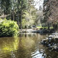 Upper duck pond in Lithia Park.- Lithia Park