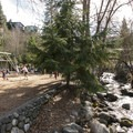 Ashland Creek and the playground in Lithia Park.- Lithia Park