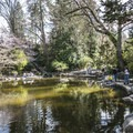 The lower duck pond in Lithia Park.- Lithia Park