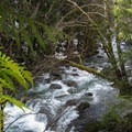 Money Creek.- Lake Elizabeth Snowshoe
