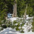 Cedar grove.- Lake Elizabeth Snowshoe