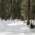 Fir forest near the riverbank.- Cooper River Trail