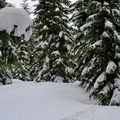 Plenty of snow around Twin Lakes in mid-March, 2014.- Twin Lakes