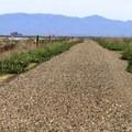 The Napa River Trail.- Napa River Bay Trail + Glass Beach