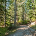 The forest at the beginning of the hike.- June Lake