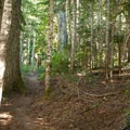 The forest along the Loowit Trail.- June Lake