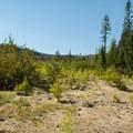Lava fields by an open meadow area.- June Lake