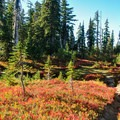 Meadows with huckleberry and heather.- Cultus Creek to Lemei Rock