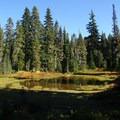 Alpine meadows on the way to Lemei Rock.- Cultus Creek to Lemei Rock