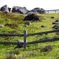 Switchbacks on the Steep Ravine Climb.- Steep Ravine Climb