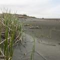 Moclips Beach.- Moclips Beach