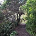 Bonham Trail.- Cooks Beach via Bonham Trail
