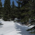 Route finding through new-growth forest.- Keechelus Ridge
