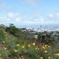 Downtown San Francisco seen from Mount Davidson.- Mount Davidson
