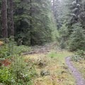 The trail crosses a couple of overgrown forest roads.- Eula Ridge Hike