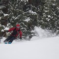 Well-spaced glades hold powder for days following storms on Powderhouse's east and north aspects. - Powderhouse Peak