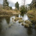 Ziegler Creek on the 0.3-mile trail to the Quinault Giant Sitka Spruce.- Quinault Giant Sitka Spruce