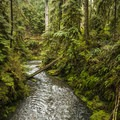 Willaby Creek along the Quinault Rain Forest Nature Trail.- Quinault Rain Forest Nature Trail Loop