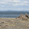 View northeast toward the Olympic Mountains on the Damon Point Hike.- Damon Point Hike