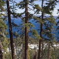 A classic view of old-growth red firs (Abies magnifica) and Lake Tahoe from Jake's Peak.- Jake's Peak