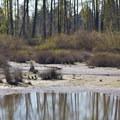 Wetland along the Ruth Bascom Riverbank Trail System.- Ruth Bascom Riverbank Trail System