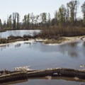 The Delta Ponds are a great spot for birdwatching.- Ruth Bascom Riverbank Trail System