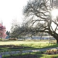 The Owens Rose Garden has some amazing trees in addition to many varieties of roses.- Ruth Bascom Riverbank Trail System