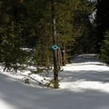 The start (and end) of the loop portion of the trail.- Old Blewett Pass Highway Ski Trails