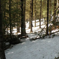 The blue diamond trail markers are consistent, but they are often difficult to spot.- Old Blewett Pass Highway Ski Trails