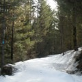 After the creek, the old logging road descends to the start of the loop.- Old Blewett Pass Highway Ski Trails