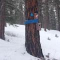 The Pine Meadow Loop Trailhead.- Old Blewett Pass Highway Ski Trails