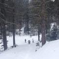 Descending the old skid road.- Old Blewett Pass Highway Ski Trails