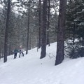 The return, a singletrack portion of the loop.- Old Blewett Pass Highway Ski Trails