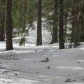 Fir forest.- Chiwaukum Creek