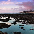 Tide pools at the Fitzgerald Marine Reserve.- Fitzgerald Marine Reserve