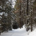 Pine tunnel on the way back to Pipe Creek Sno-Park.- Pipe Creek